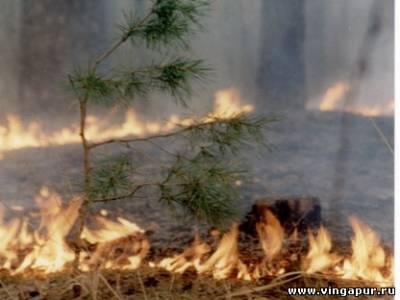 По дороге в посёлок горит лес