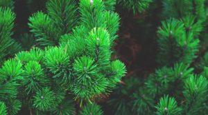 На месте пустыря под Ноябрьском появится густой лес